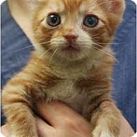 Adopt A Pet :: Morir Sonando - Secaucus, NJ