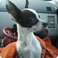 Adopt A Pet :: Oreo - Justin, TX