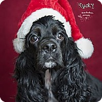 Adopt A Pet :: Lucky - Rancho Mirage, CA
