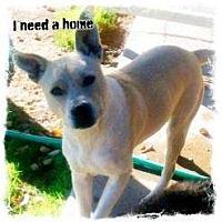 Adopt A Pet :: Blu - Scottsdale, AZ