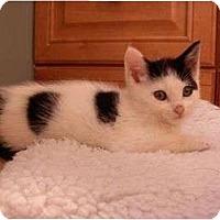 Adopt A Pet :: Spinks - Reston, VA