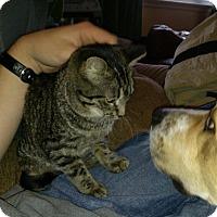 Adopt A Pet :: Bashful - Raritan, NJ