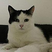 Adopt A Pet :: Rowena - Pineville, NC