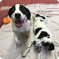 Adopt A Pet :: Benny- ILLINOIS - Wood Dale, IL