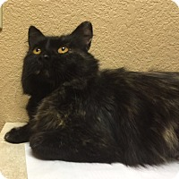 Adopt A Pet :: Nutmeg - Colorado Springs, CO