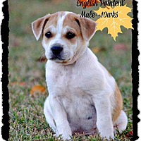 Adopt A Pet :: Becker in CT - East Hartford, CT