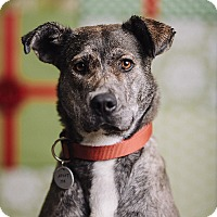 Adopt A Pet :: Star - Portland, OR