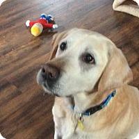 Adopt A Pet :: Piper - Island Lake, IL