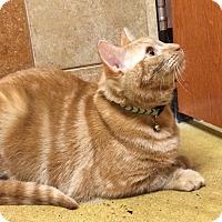 Adopt A Pet :: Peanut (the Gentle Giant) - Fairfax, VA