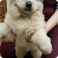 Adopt A Pet :: Panda - Barrington, RI