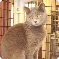Adopt A Pet :: Gracie - Muscatine, IA