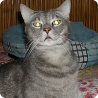 Adopt A Pet :: Bill - Bonita Springs, FL