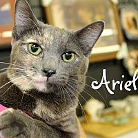 Adopt A Pet :: Ariel - Wichita Falls, TX