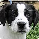 Adopt A Pet :: Cameron