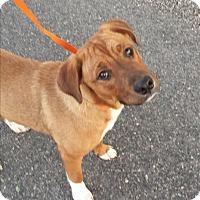 Adopt A Pet :: Ari - Kirkland, WA
