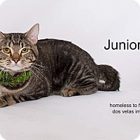 Adopt A Pet :: Junior - Arcadia, CA