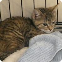 Adopt A Pet :: Gillian - Durham, NC