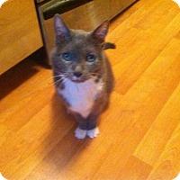 Adopt A Pet :: Ashley - St. Paul, MN
