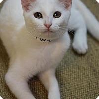 Adopt A Pet :: Cassidy - DFW Metroplex, TX