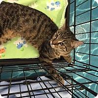 Adopt A Pet :: Fiona - Mansfield, TX