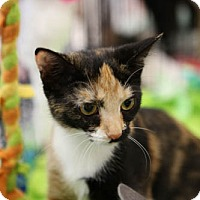 Adopt A Pet :: Paisley - Olive Branch, MS