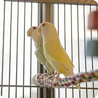 Adopt A Pet :: Ibis and Sunny - Burlingame, CA
