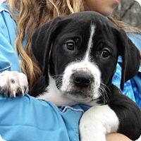 Adopt A Pet :: Tank (11 lb) Video! - Williamsport, MD