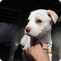 Adopt A Pet :: A283265 - Conroe, TX