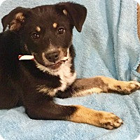 Adopt A Pet :: Sandy - Snyder, TX