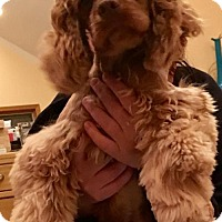 Adopt A Pet :: Reba & Cola - Flushing, NY