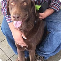 Adopt A Pet :: A419857 - San Antonio, TX
