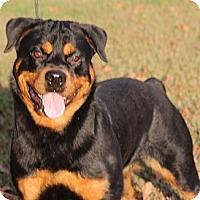 Adopt A Pet :: Lily - Alachua, GA