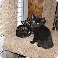 Adopt A Pet :: Mandy - Harrisburg, NC