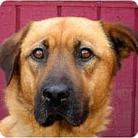 Adopt A Pet :: Jill - Portland, OR