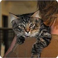 Adopt A Pet :: Deke - Monroe, GA