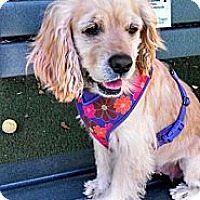 Adopt A Pet :: Buffy - Encinitas, CA
