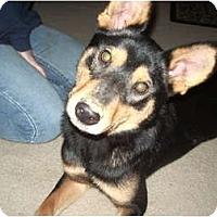 Adopt A Pet :: Zorro - Covington, KY