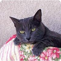 Adopt A Pet :: Eve - Palmdale, CA