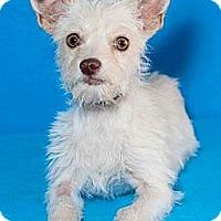 Adopt A Pet :: Josie - Phoenix, AZ
