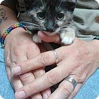 Adopt A Pet :: Cinder - Grand Rapids, MI