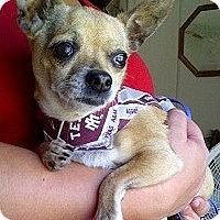 Adopt A Pet :: KIERA - AUSTIN, TX