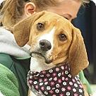 Adopt A Pet :: Miranda