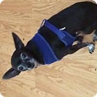 Adopt A Pet :: Sparkey - Seattle, WA