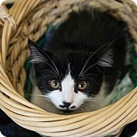 Adopt A Pet :: Stash - Muskegon, MI