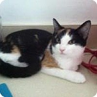 Adopt A Pet :: Jill - Medford, NJ