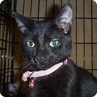 Adopt A Pet :: Mable - Orlando, FL
