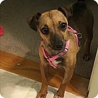 Adopt A Pet :: Kisa - Homewood, AL