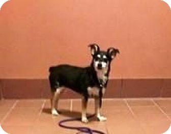 Terrier (Unknown Type, Medium) Mix Dog for adoption in Baraboo, Wisconsin - Sadie