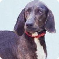 Adopt A Pet :: Aria Von Tess - Lincolnton, NC