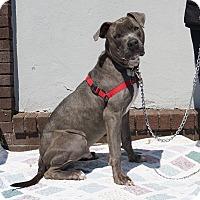 Adopt A Pet :: Tip - Mt Vernon, NY